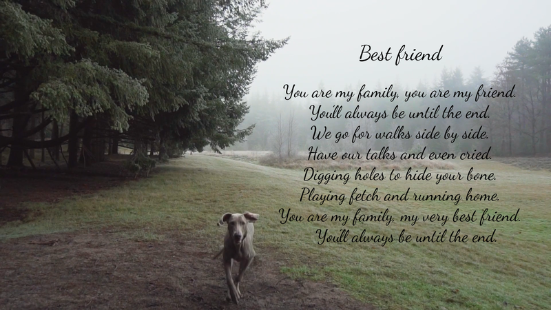 Best Friend - Poetry by Lace